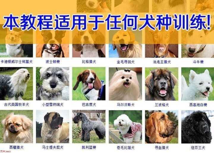 训练狗狗听简易主人口令教程-云奇网