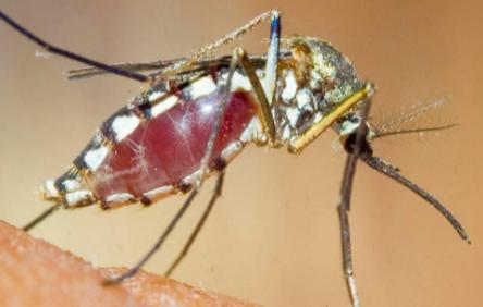 花蚊子咬人后包什么时候能下去1