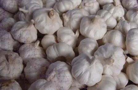 红皮大蒜种植需要注意什么 3