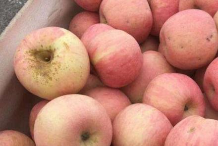 苹果为什么会产生水裂纹 3