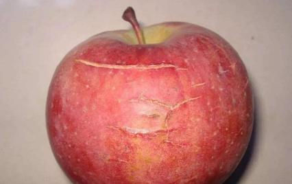 苹果为什么会产生水裂纹 2