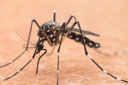 冬天蚊子都冻死了夏天蚊子怎么来的4