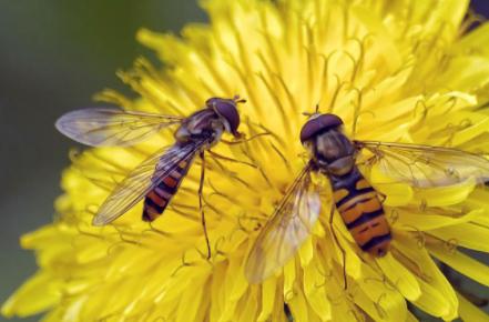 黄色花粉怎么洗1