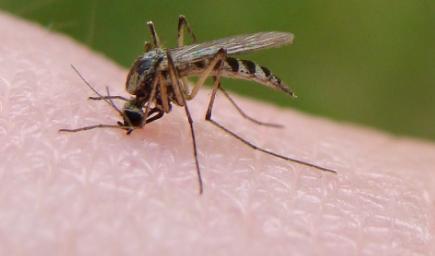 雨为什么砸不死蚊子1