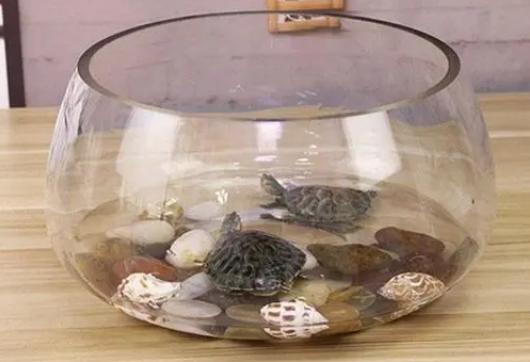 大学宿舍允许养乌龟吗2