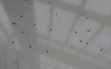 为什么窗户边死的虫子多3