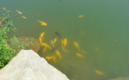 养鱼的水是什么颜色好3