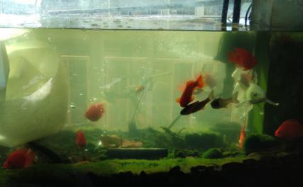 养鱼的水是什么颜色好2