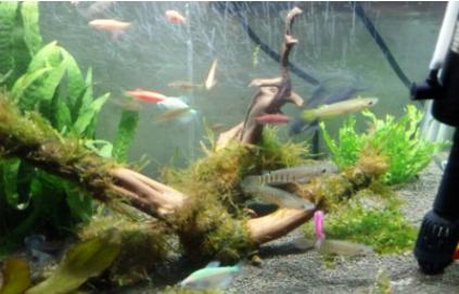 养鱼的水是什么颜色好4