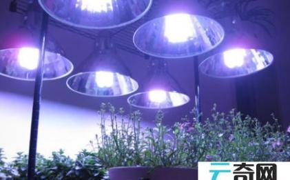 植物补光灯能促进开花吗