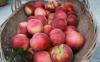 桃子里面有胶状物质是坏了吗