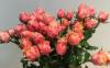 玫瑰插花水一般几天换一次