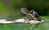 养龟困水需要多长时间