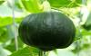 蔬菜发生早衰的原因是什么