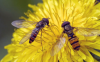 黄色花粉怎么洗