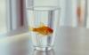 大学生宿舍可以养鱼吗