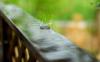 2021年8月雨水多吗