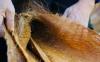 棕垫长虫子怎样消灭