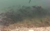 鱼塘下雨后为什么大量死亡